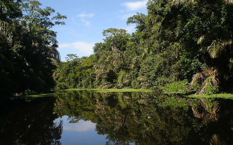 Tortuguero National Park is a set of water canals and it is locally known as the Amazonas of Costa Rica.