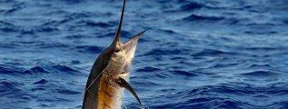 fishing_cr_01.jpg