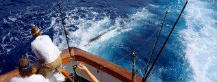fishing_cr_05.jpg