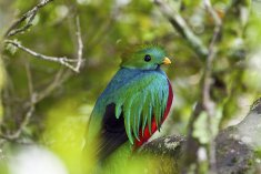 Costa Rica Birdwatching Tour