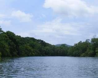 Tamarindo Mangrove & Estuary