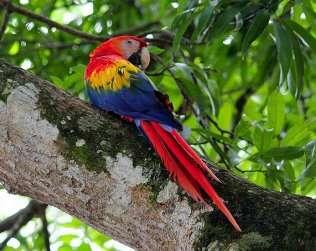 Carara National Park  From Manuel Antonio