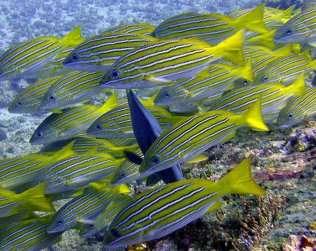 Buceo O Snorkel En Isla Del Caño