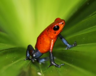Natura Premiun Frogs, Crocodile And Caymans, Serpentarium, Naturalistic Trails, Turles Pond.