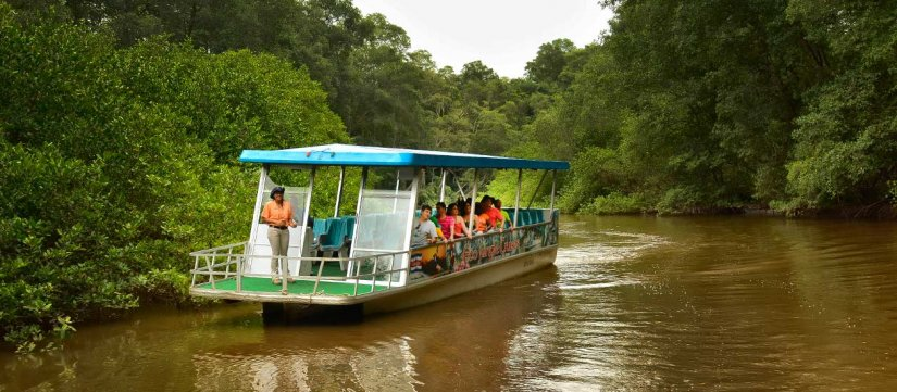 Boat ride through Jungle River and Crocodile Adventure