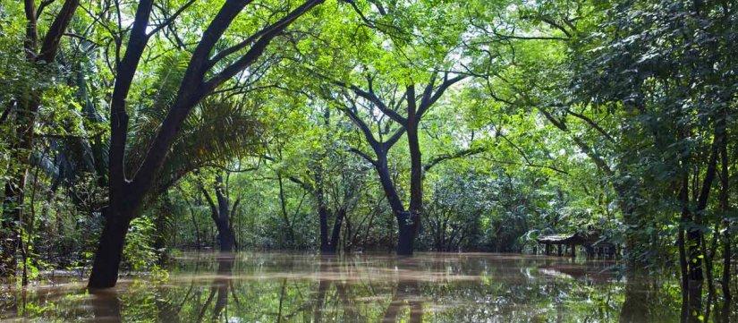 Tour por los humedales del Parque Nacional Palo Verde y Rio Tempisque
