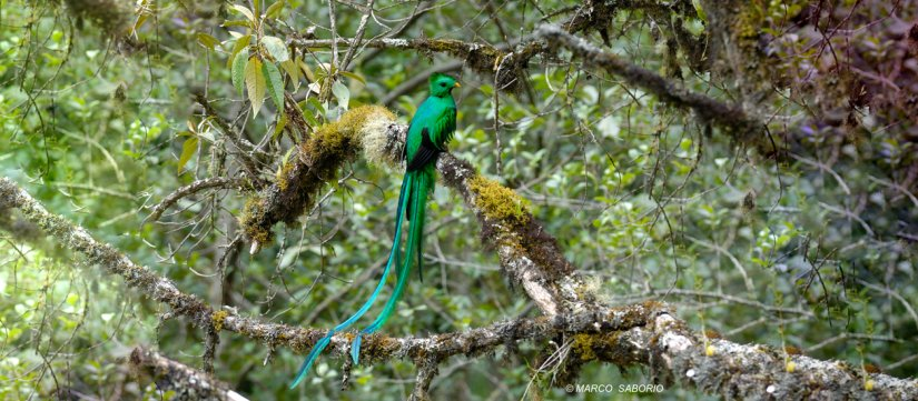 Walking Quetzal tour